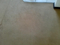 after we cleaned a customer's carpet