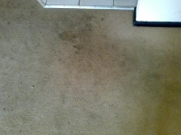 before we cleaned a customer's carpet
